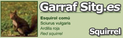 costa-garaff-Squirrel